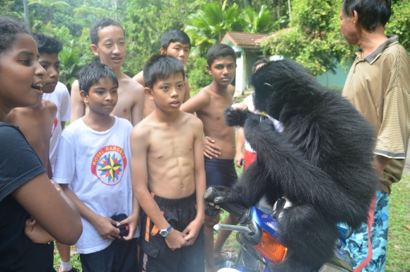 19 a black gibbon giving a lesson